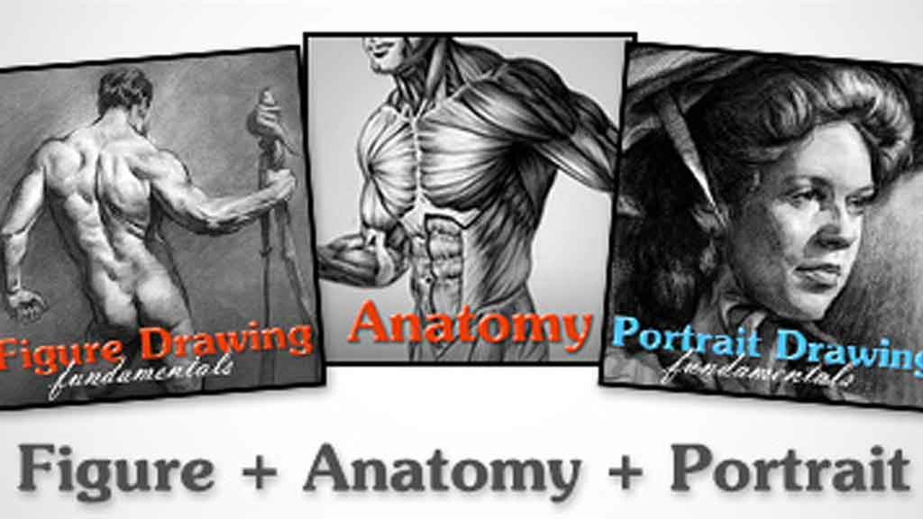 Anatomy-Figure-Portrait-Proko